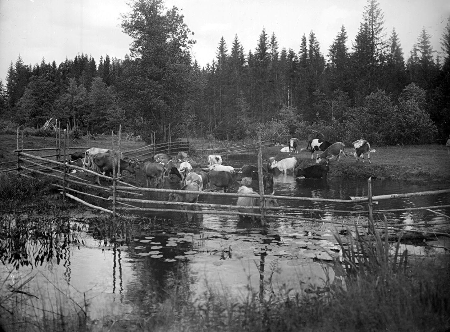 18Вид реки Волги на четвертой версте, вид прудов. 1903 г. Тверская губерния.